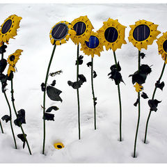 Winter Sunflowers